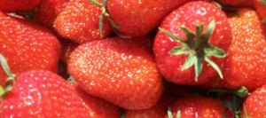Fresh juicy English strawberries at The Farm Shop Lyne